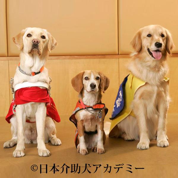 盲導犬、聴導犬、介助犬の皆さん(©日本介助犬アカデミー)