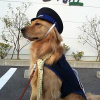【介助犬】オーシャンです♪