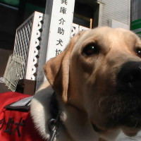 【介助犬】ボクの仕事はPR犬