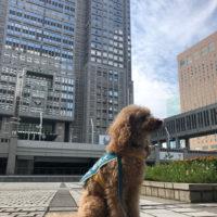 東京のお空