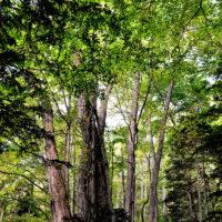 森と樹木の社会福祉
